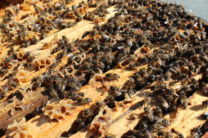 La ruche ANRU