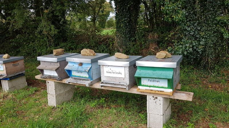 La ruche Business Flow Consulting