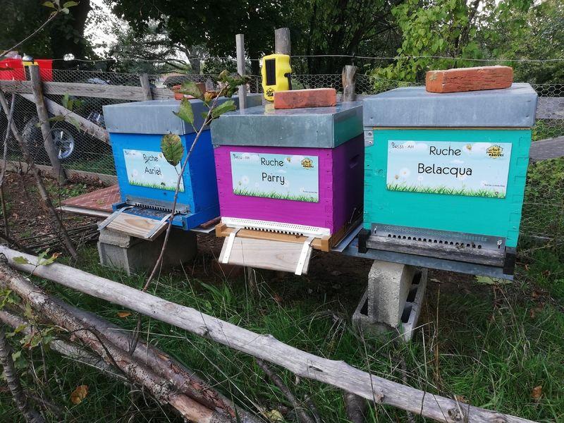 La ruche Belacqua