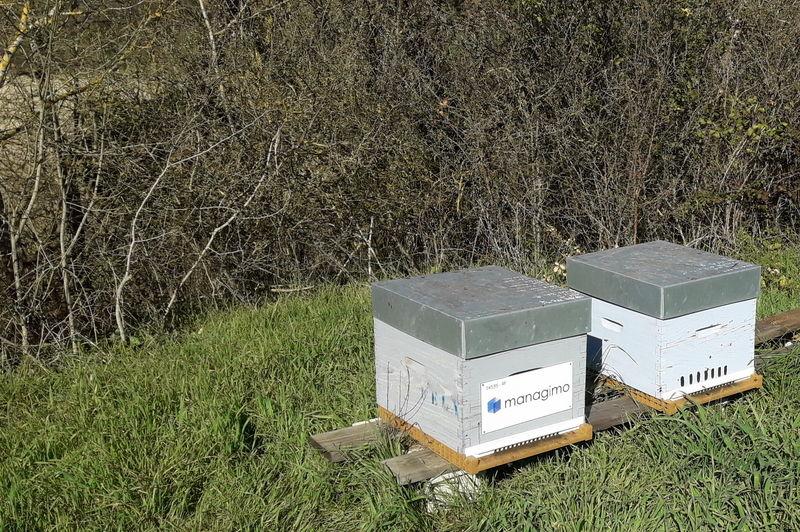 La ruche MANAGIMO