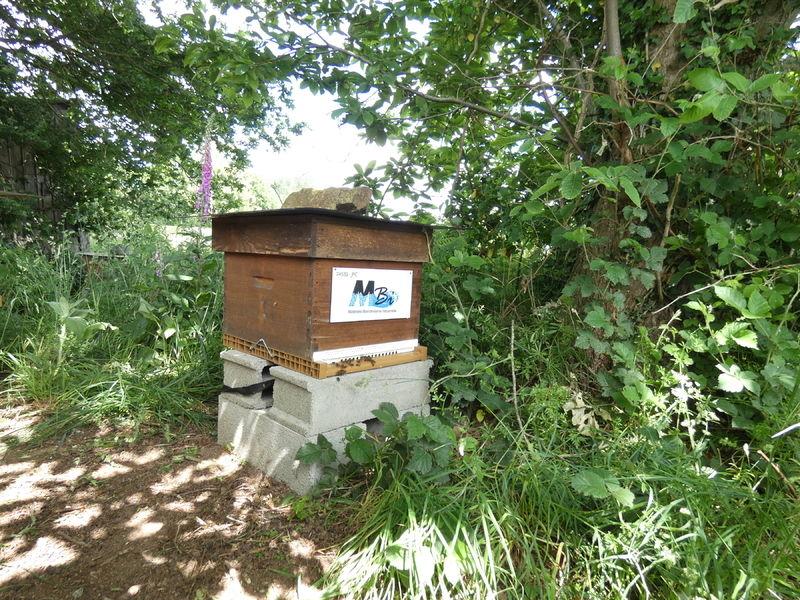 La ruche Mbi