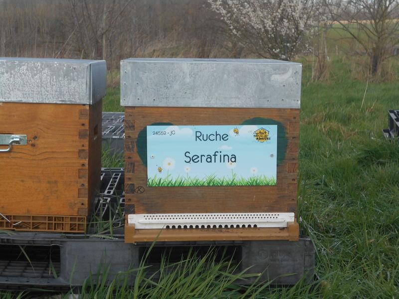 La ruche Serafina
