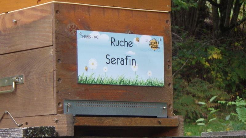 La ruche Serafin