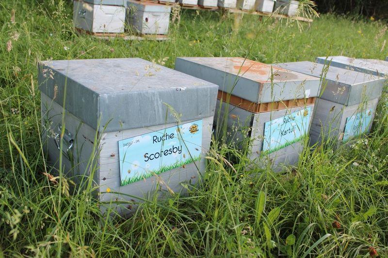 La ruche Scoresby