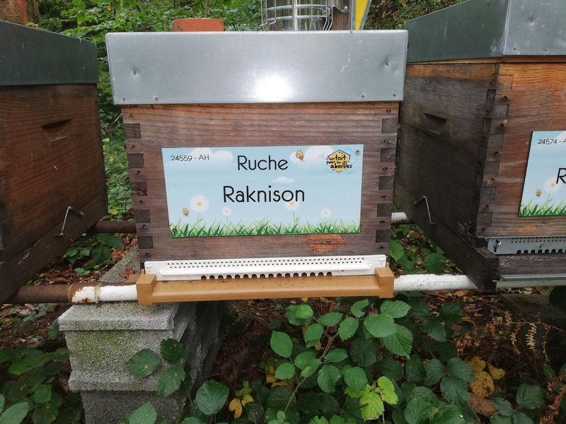 La ruche Raknison