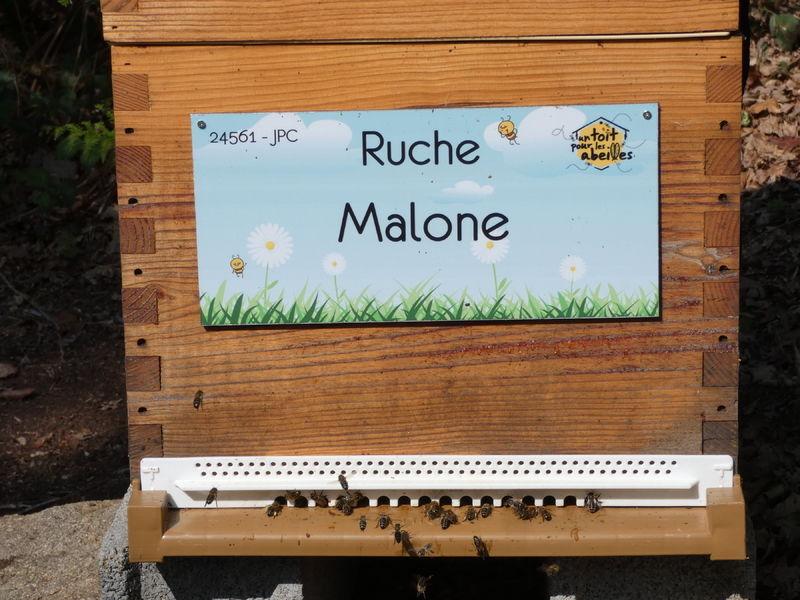 La ruche Malone