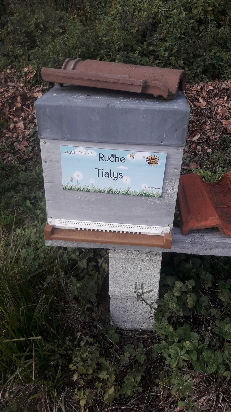 La ruche Tialys