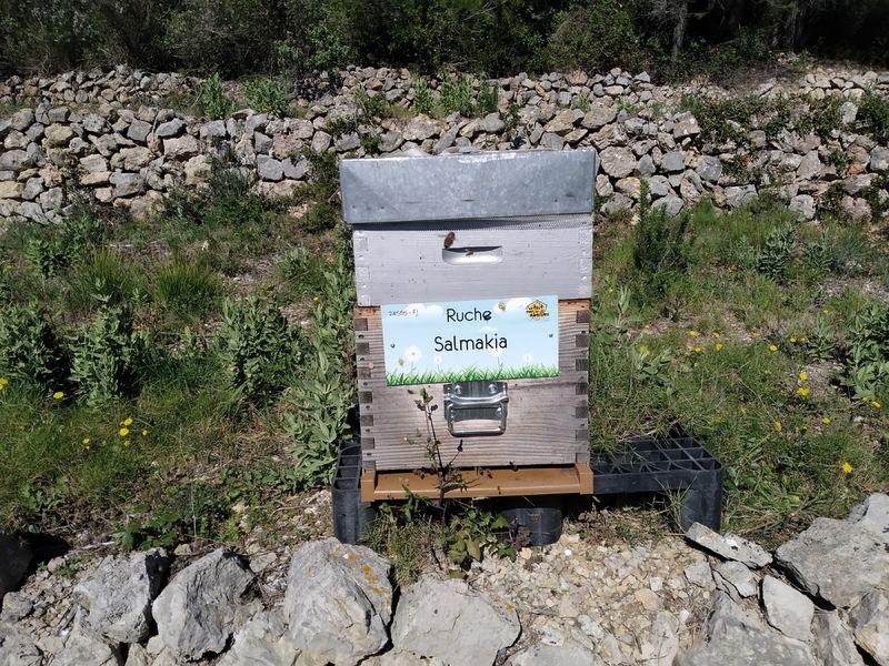 La ruche Salmakia