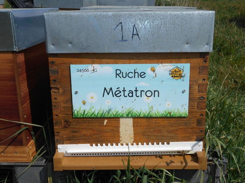 La ruche Métatron