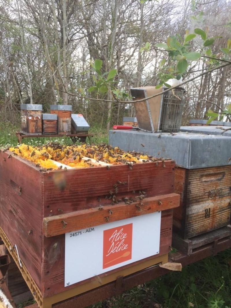 La ruche Kitchen Academy Alice Délice