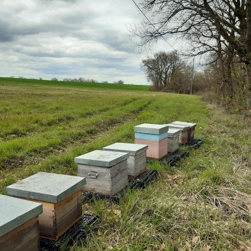 La ruche Cubisme