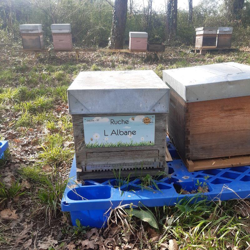 La ruche L Albane