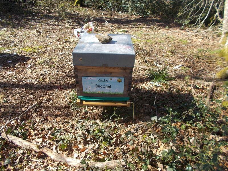 La ruche Baconal