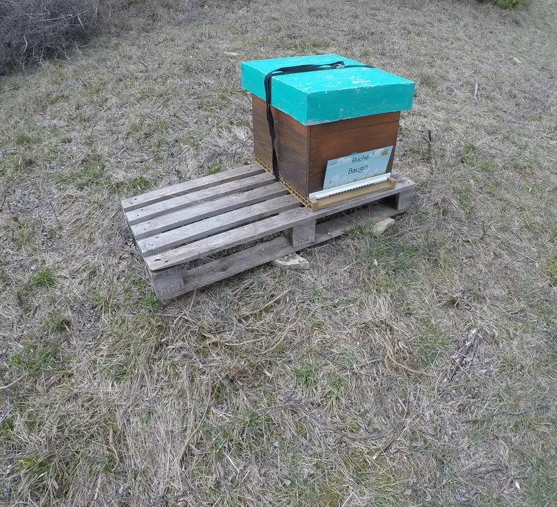 La ruche Baugin