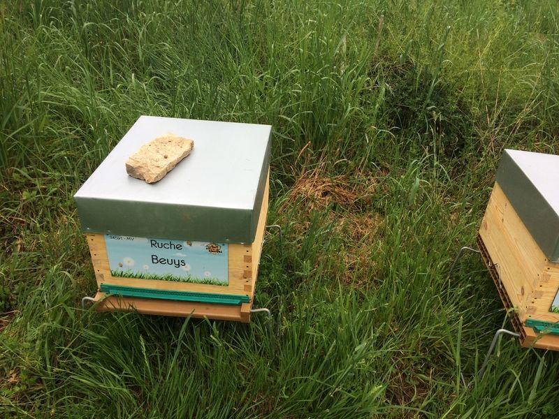 La ruche Beuys