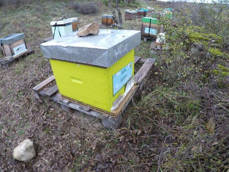 La ruche Agnolo