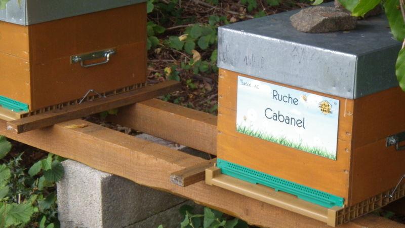 La ruche Cabanel