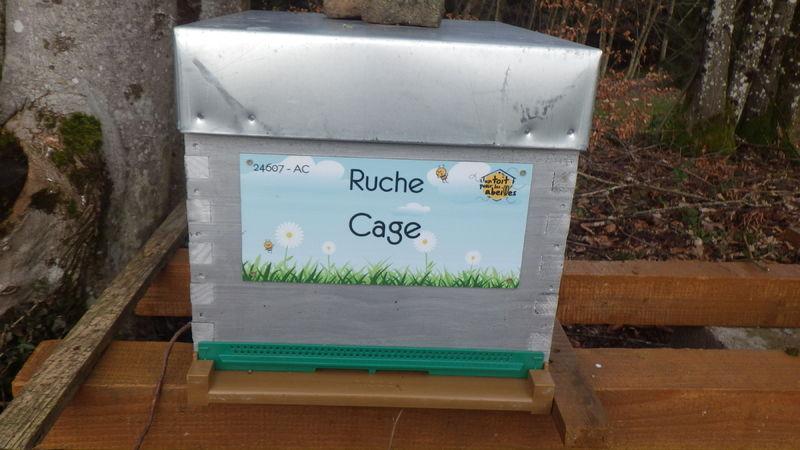 La ruche Cage