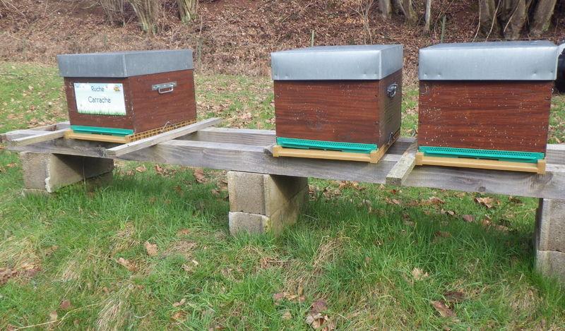 La ruche Carrache