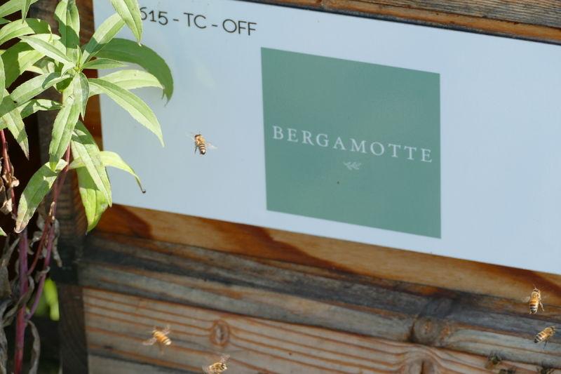 La ruche Bergamotte