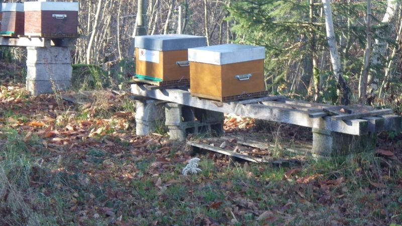La ruche Groupe Optim