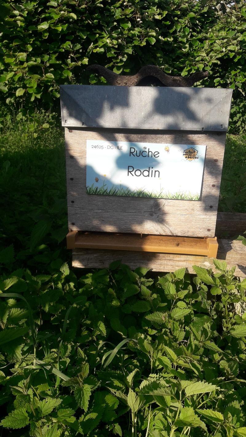 La ruche Rodin
