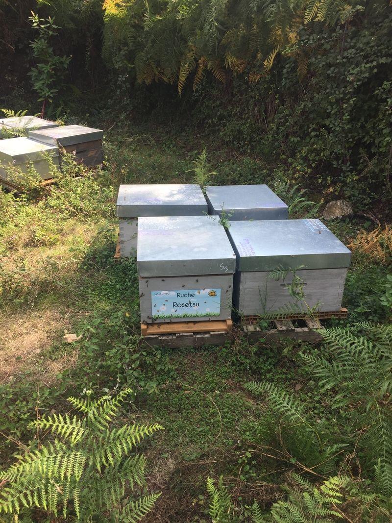 La ruche Rosetsu