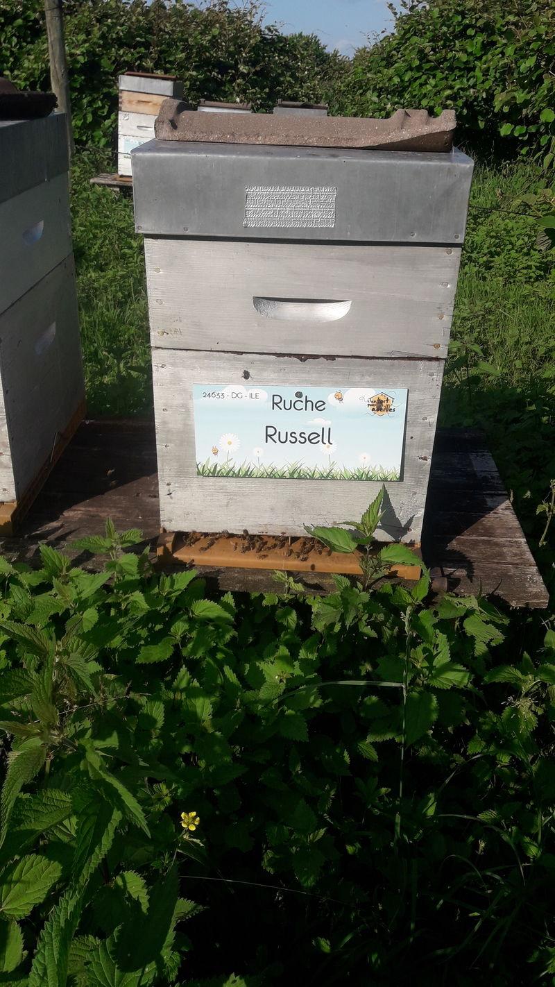 La ruche Russell