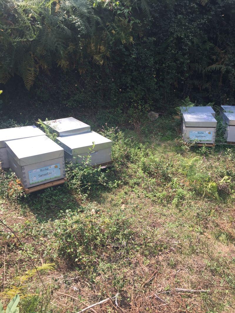 La ruche Sansetsu