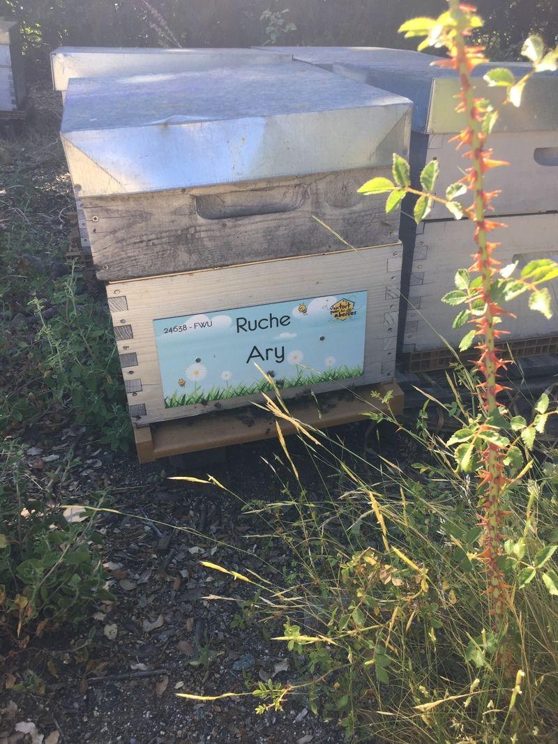 La ruche Ary