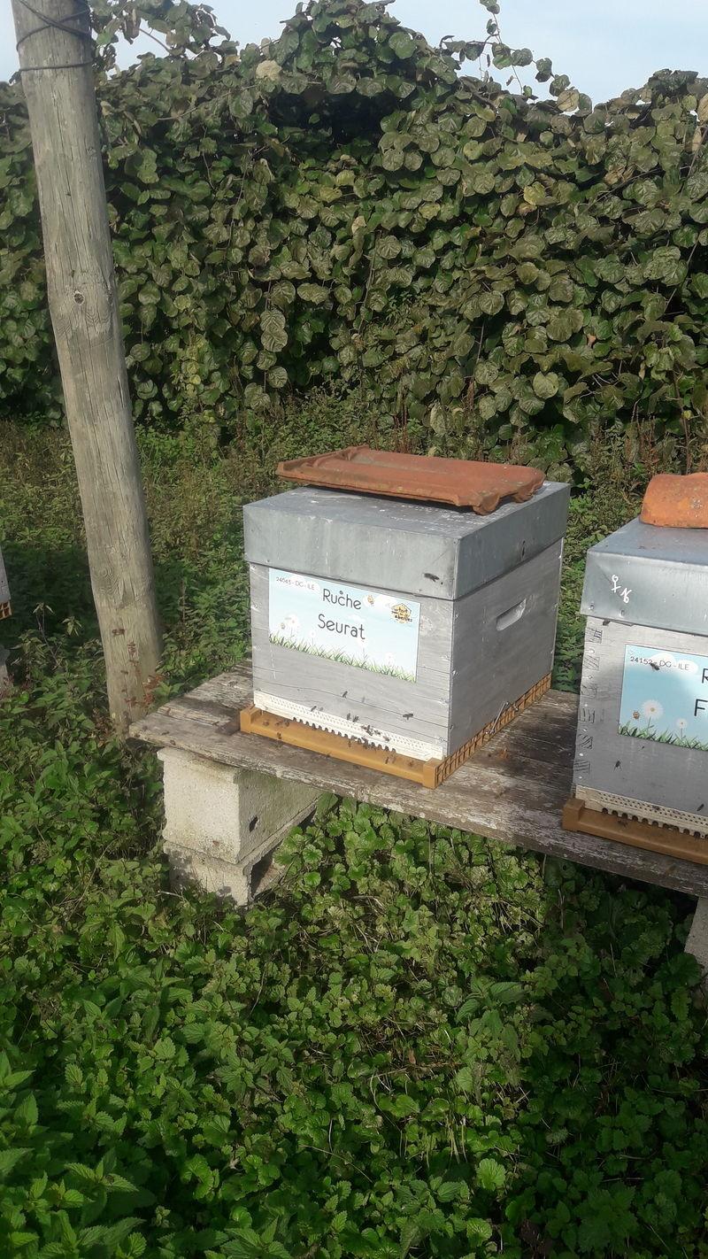 La ruche Seurat
