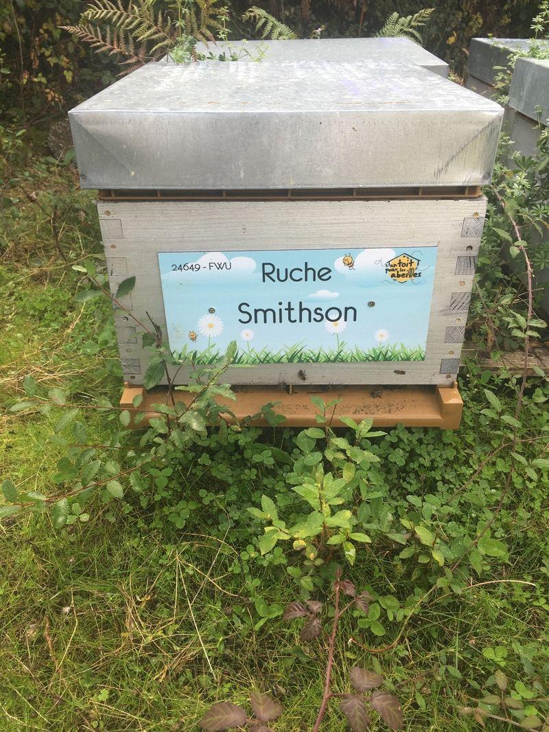 La ruche Smithson