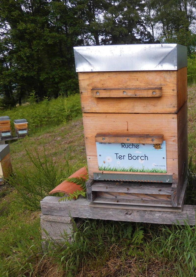 La ruche Ter Borch