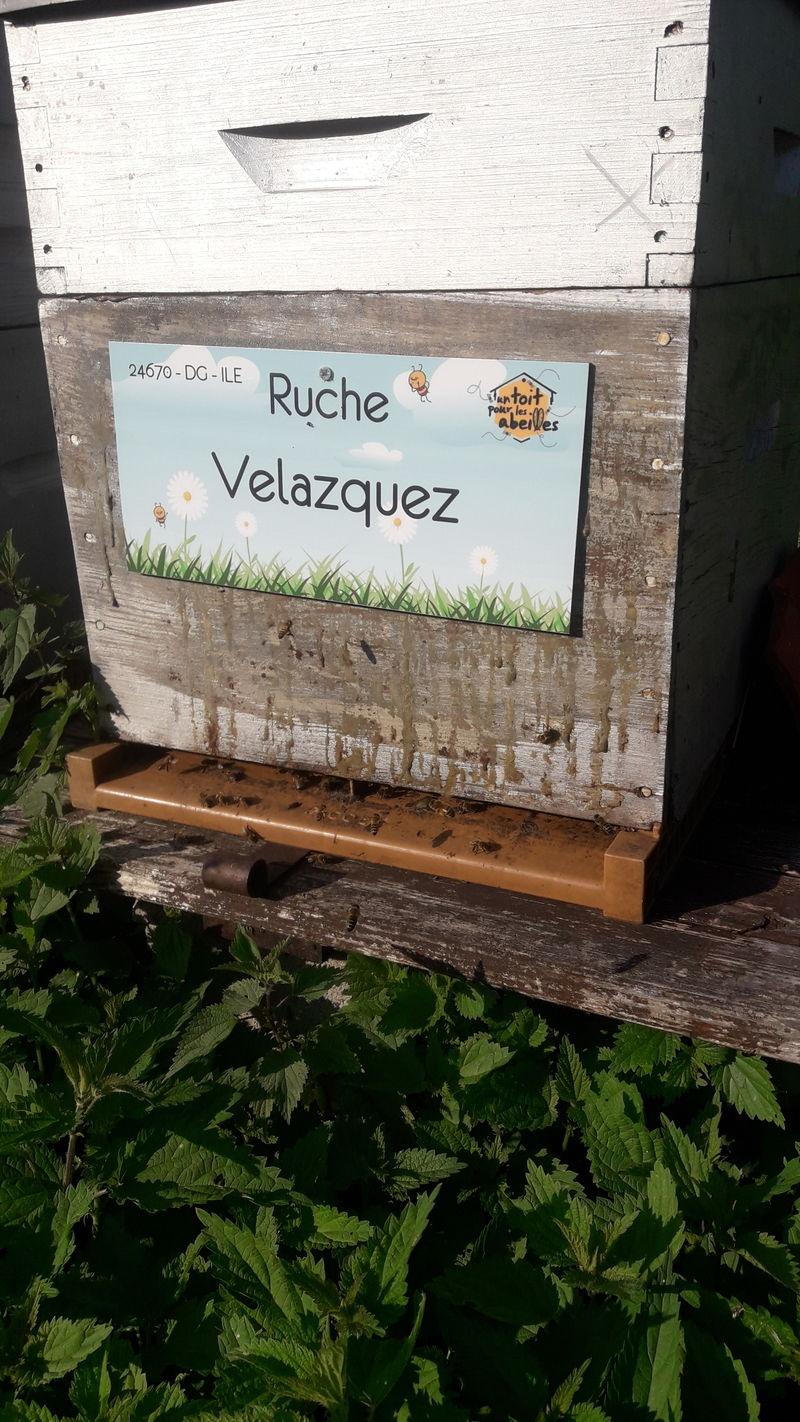 La ruche Velazquez