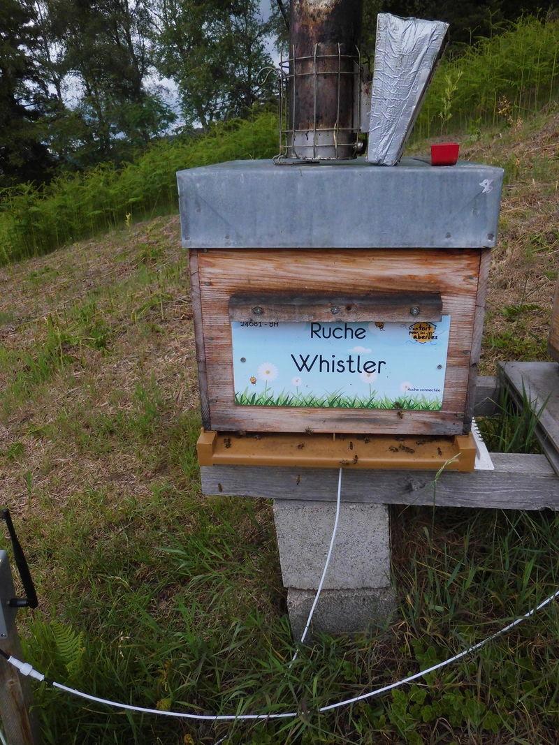 La ruche Whistler