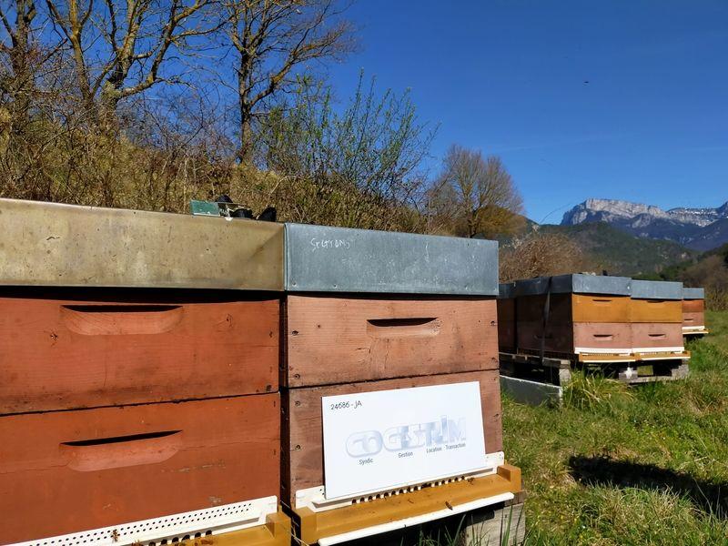 La ruche Régie cogestrim