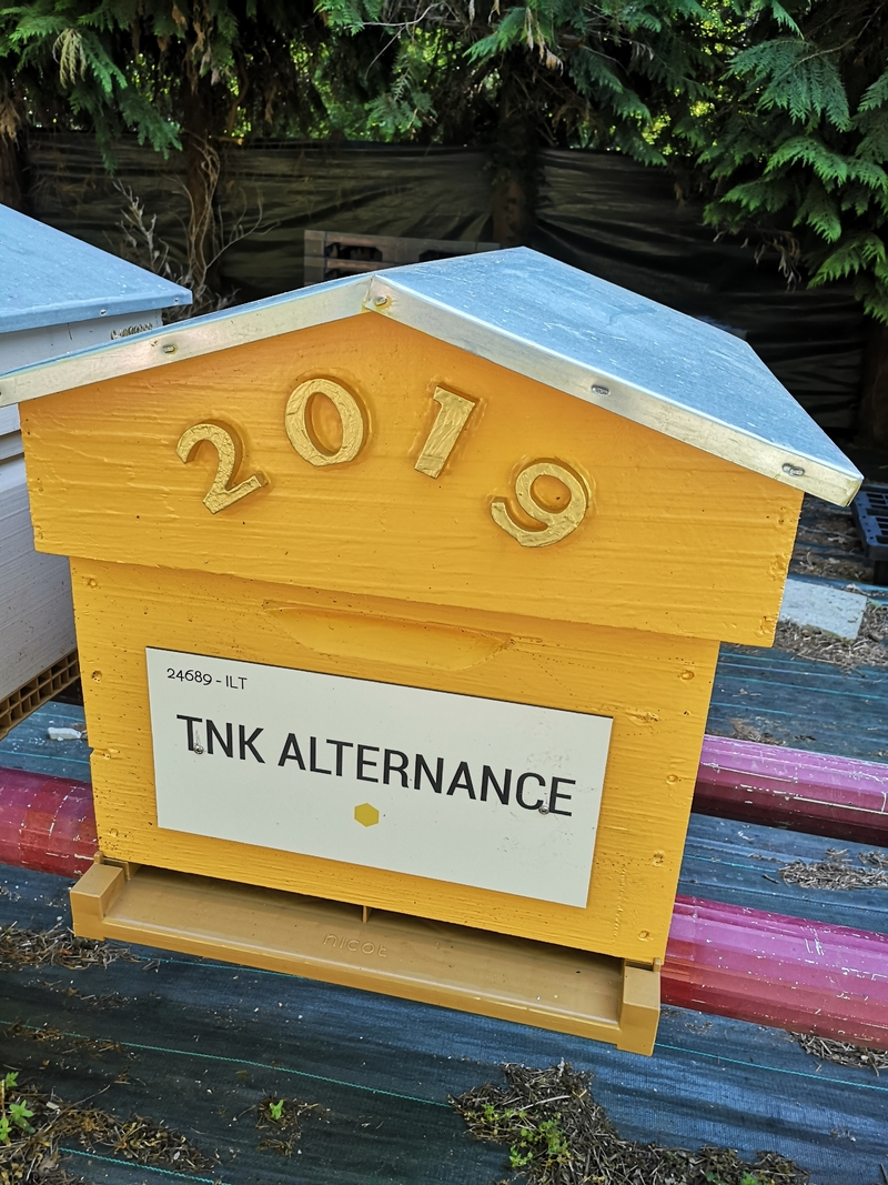 La ruche TNK ALTERNANCE