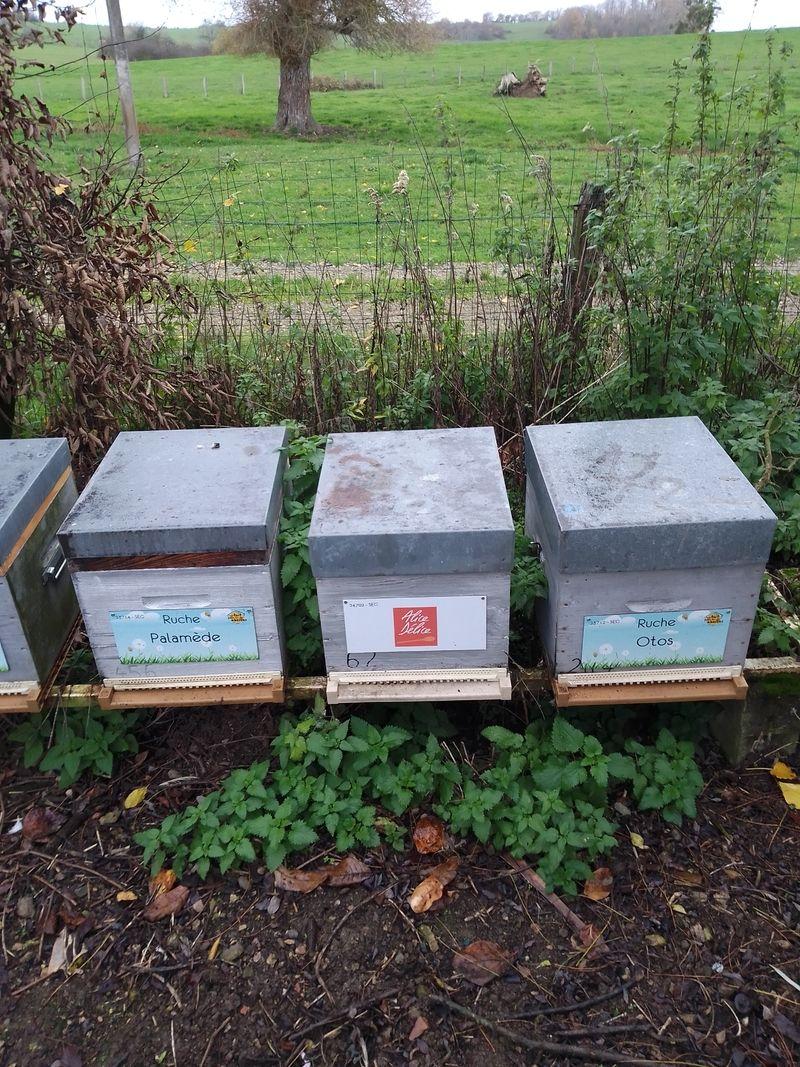 La ruche Alice Délice Rivétoile