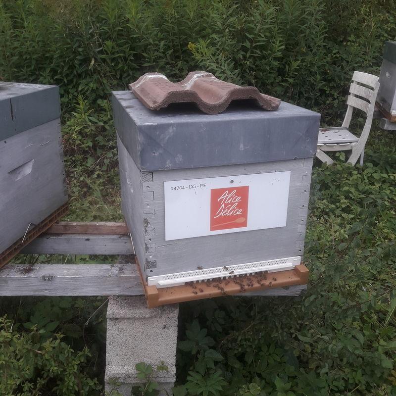 La ruche Alice Délice Cap 3000