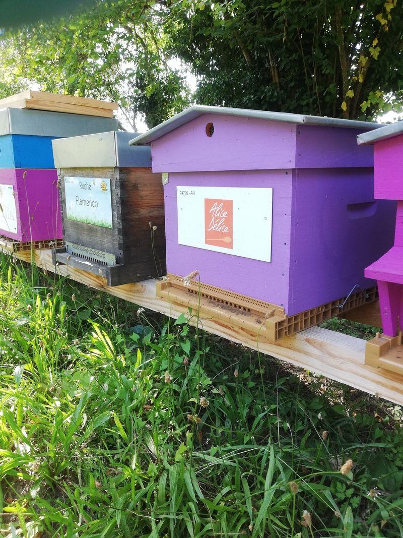 La ruche Alice Délice La Défense