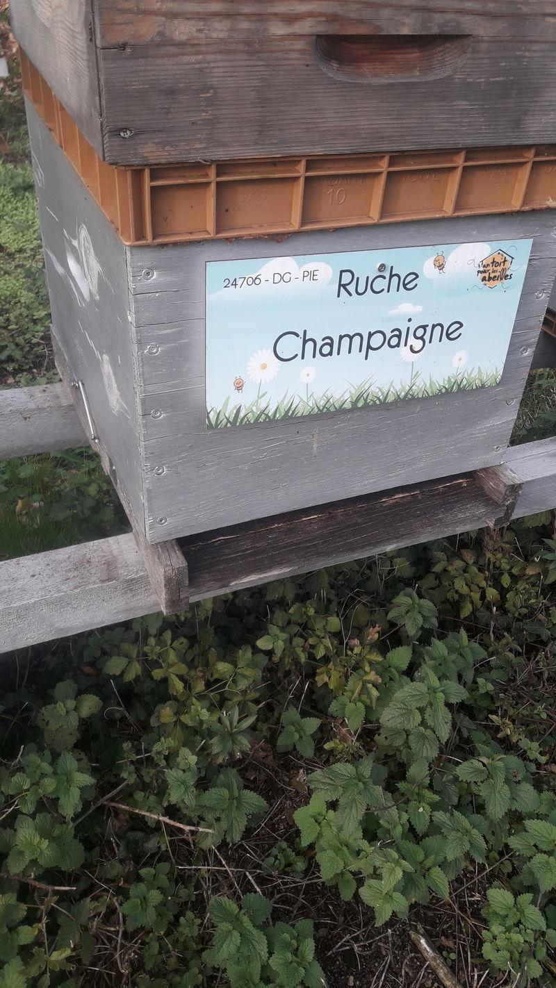 La ruche Champaigne