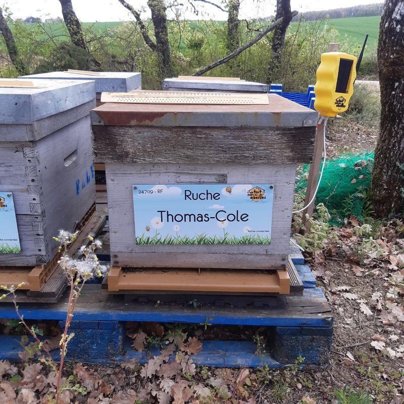 La ruche Thomas-Cole