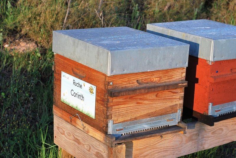 La ruche Corinth
