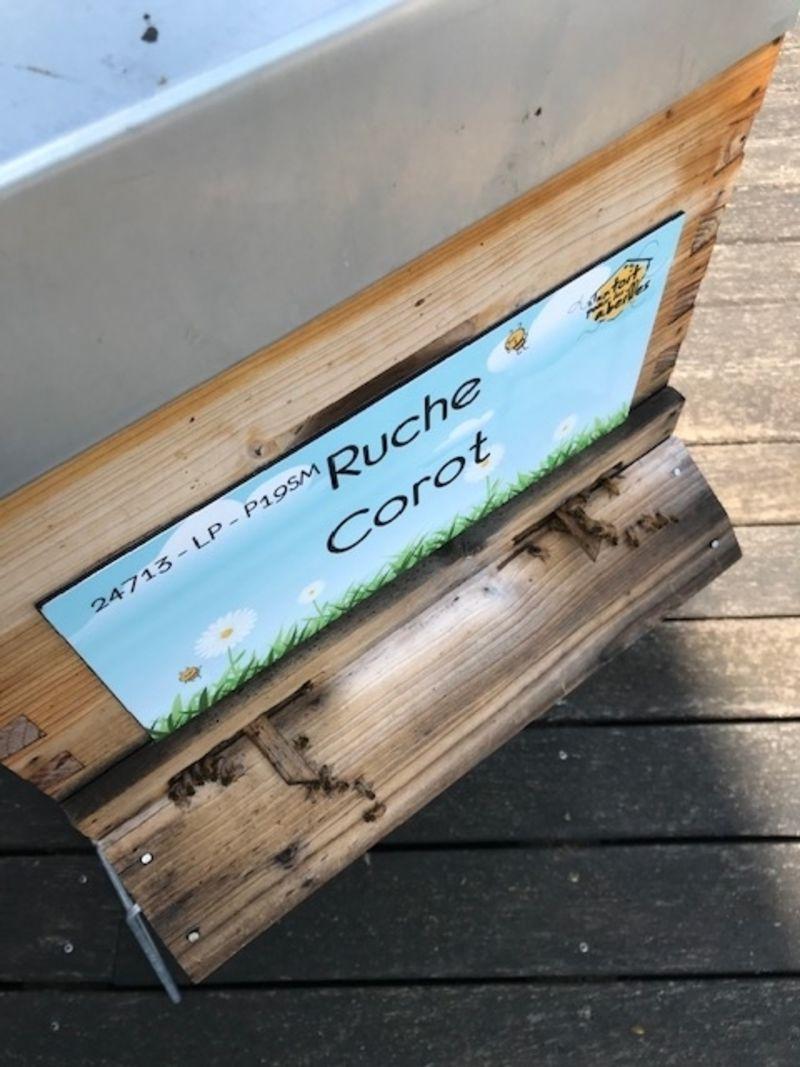 La ruche Corot