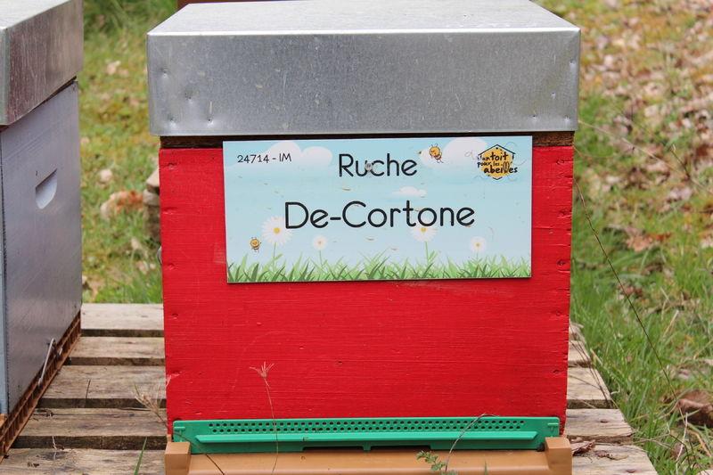 La ruche De-Cortone