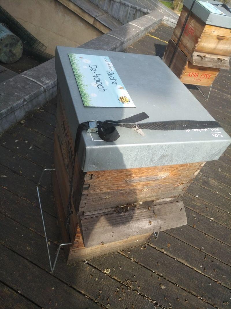 La ruche De-Hooch