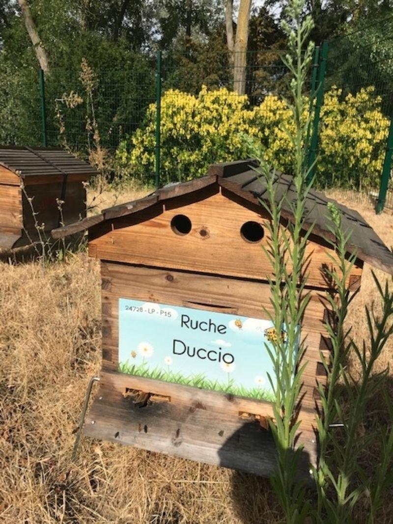 La ruche Duccio