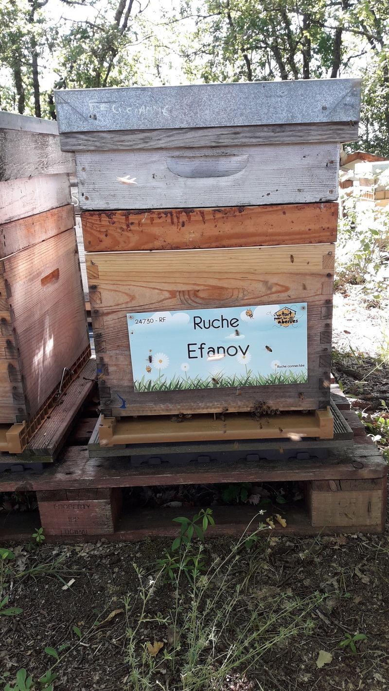 La ruche Efanov