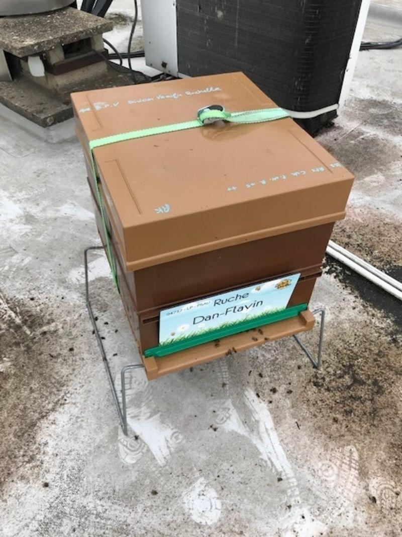La ruche Dan-Flavin