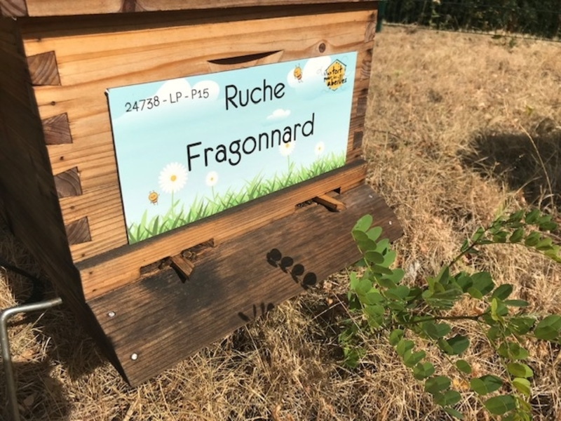 La ruche Fragonnard